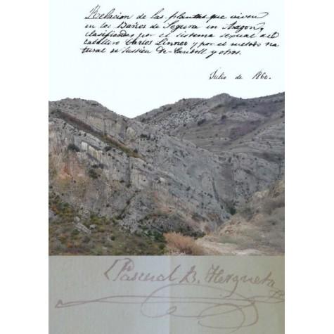 Transcripción del manuscrito: Relación de las plantas que viven en los Baños de Segura en Aragón ..., escrito por D Pascual Bailón Hergueta